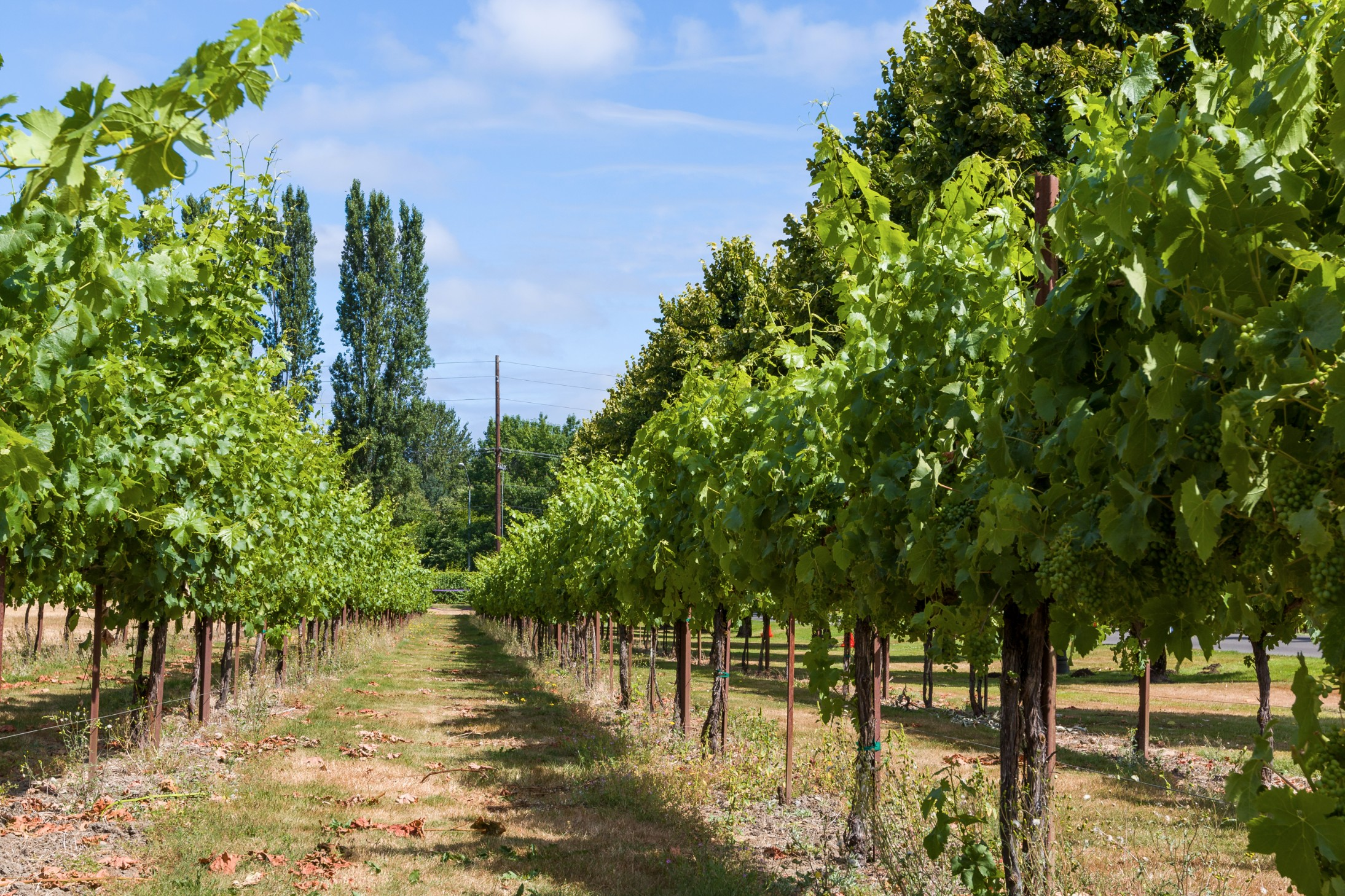 WindermereNorth_Woodinville_Wineries.jpg