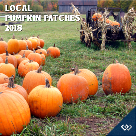 Pumpkin-Patch-1.png